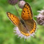 promouvoir la biodiversité