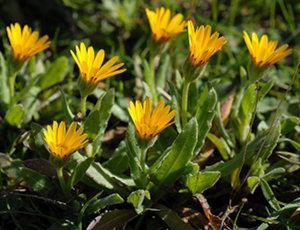 des plantes rustiques